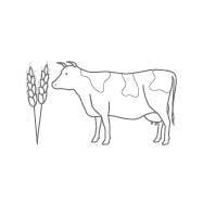 Cow and wheat